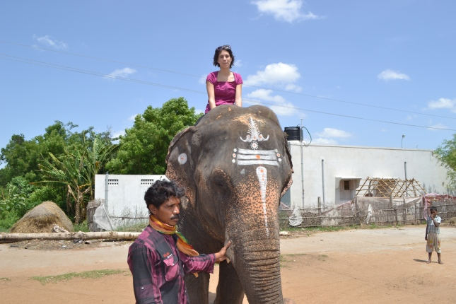 Best $2 Elephant Ride In India